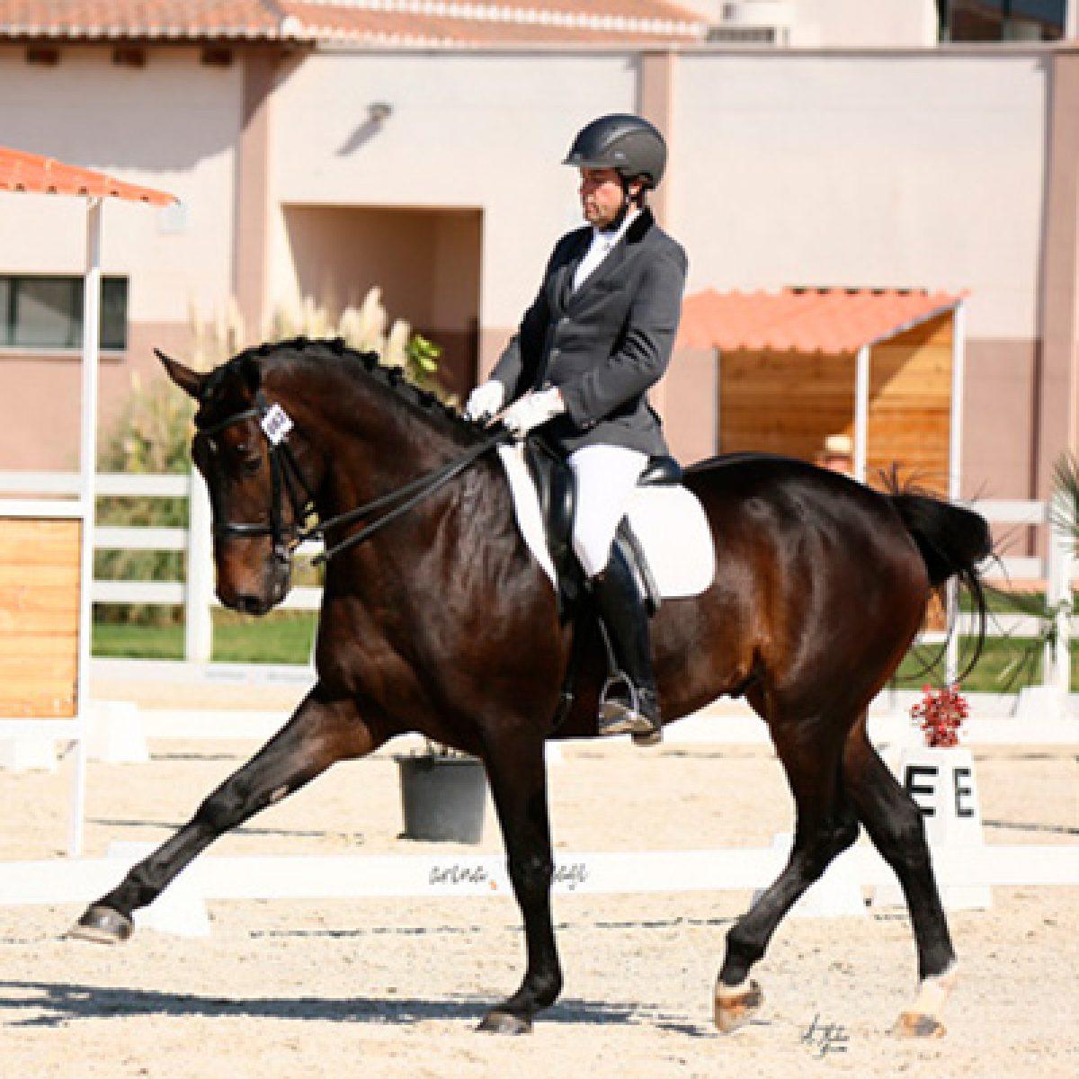 Publicaciones en revista a Galope-trofeo caballo